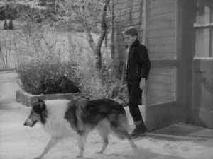 """…walk the boy, Lassie, walk the boy… like I got nothing better to do"""
