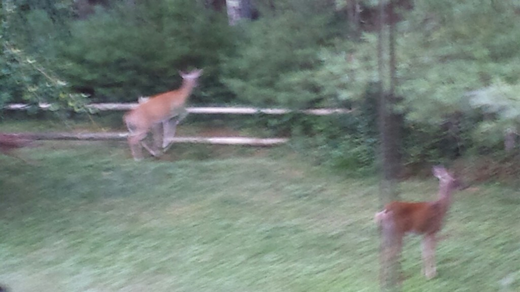 (psst!! Mrs Bambi, yo  get the frickin kids outta here!  alright, the fawn. just lay low, it's gonna be hunting season soon.)