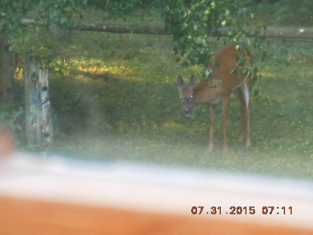 'zombie deer at the pear trees in Ola's grave area'