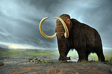 220px-Woolly_mammoth